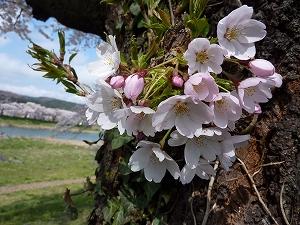 穏やかな春の風を受けて