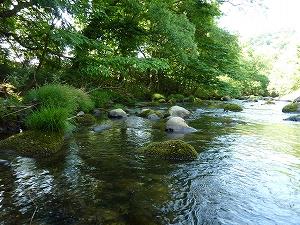 山の緑と川のせせらぎは、釣り人でなくても皆、癒される情景です。