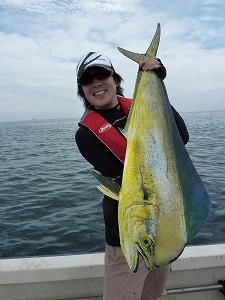 盛夏~初秋が最盛期のシイラ釣り。皆さんも、ぜひお楽しみ下さい。
