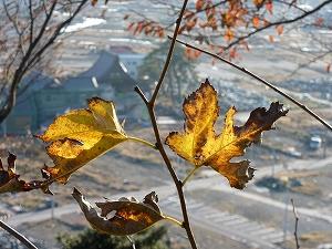 日和山より眼下を望む。下に見えるのは甚大な津波被害を受けた石巻市の南浜町