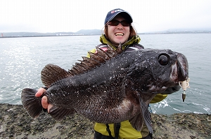 55cm・3.2kgの巨大クロソイ。堤防にもこんな素晴らしい魚が潜んでいるから気が抜けない!!