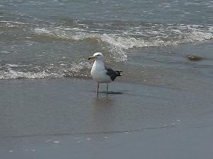 夏のなぎさを吹き抜ける潮風は最高に気持ちいい。