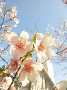 桜前線の声が聞こえる季節になりましたね。