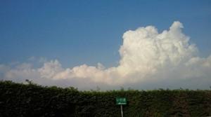 福島の空はすっかり夏空になっていました