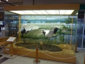 たんちょう釧路空港②