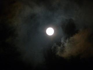 お月見。中秋の名月です。