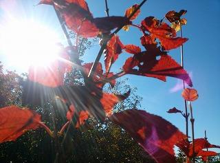 宮城県内も紅葉の季節を迎えました